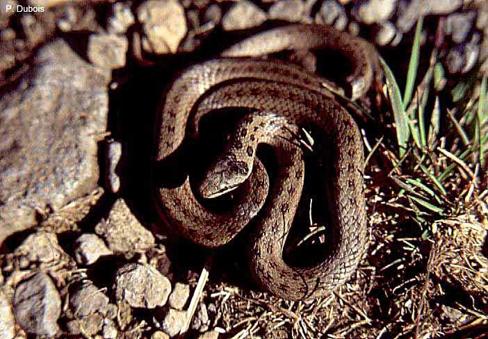 Un serpent sur le rebord de la fen tre au jardin - Piege a serpent ...